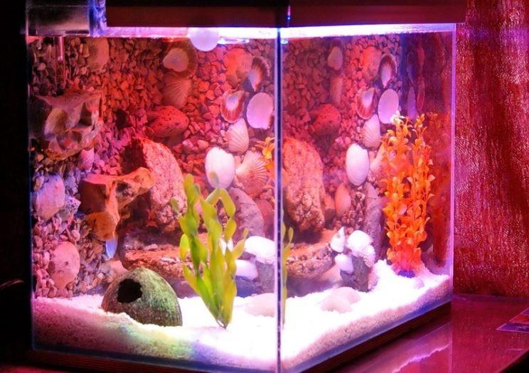 фото аквариума псевдоморье