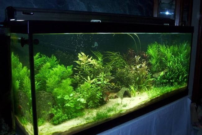 Освещение домашнего аквариума