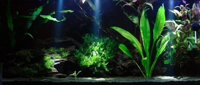 Сумеречное освещение аквариума.