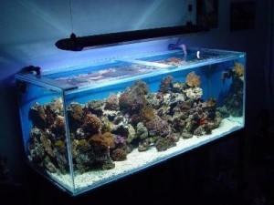 надлежащее освещение аквариума