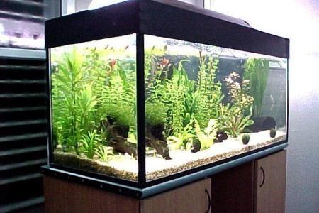 правильное освещение в аквариуме