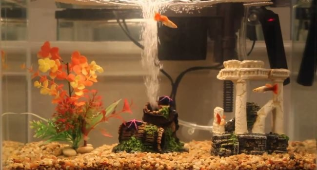 аквариум с системой аэрации