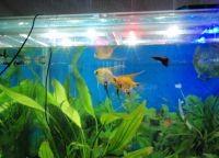 Освещение аквариум1