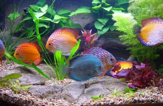 Как выбрать внешний фильтр для аквариума
