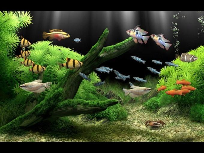 лал сделать каркасный аквариум как сделать каркасный аквариум своими руками