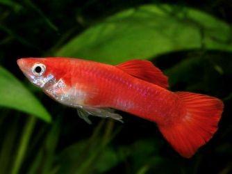 Каких рыбок завести начинающему аквариумисту1
