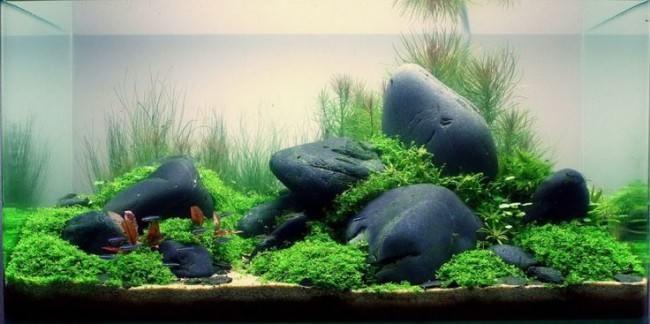 Использование камней в аквариуме.
