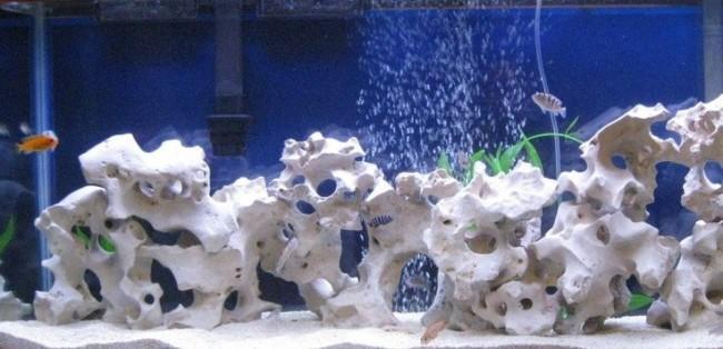Известняк в аквариуме.