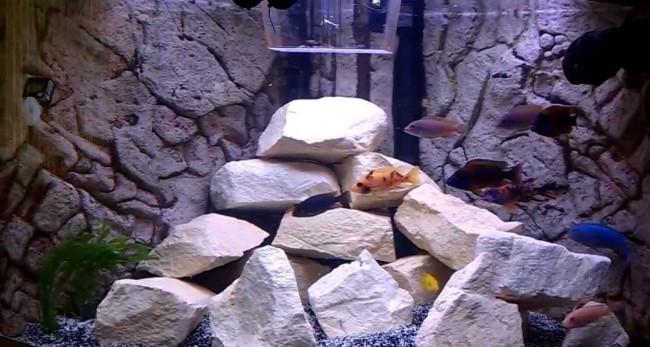 Песчаник в аквариуме.