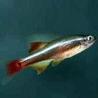 Аквариумные рыбки для начинающих2