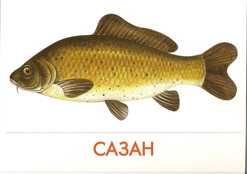 Раскраска аквариум с рыбками Распечатать картинки для детей