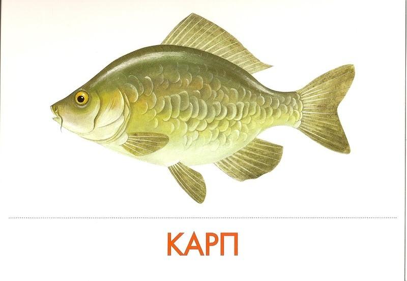 Картинки рыбок для детей  steshkaru