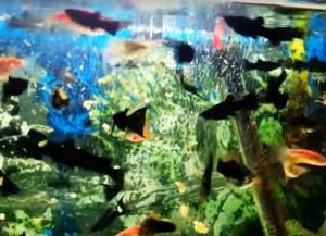 корм для аквариумных рыбок своими руками11