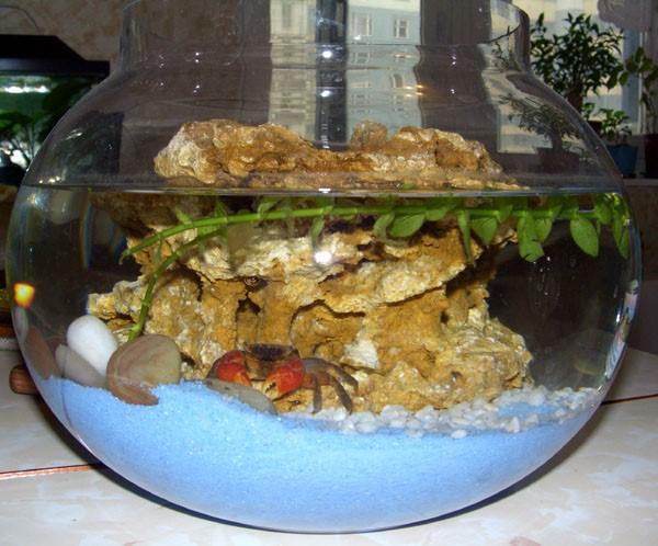 краб и его аквариум
