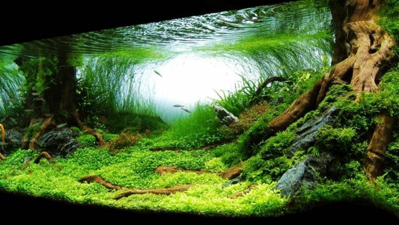 фотография аквариума