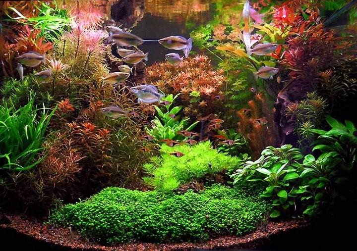 аквариум фотография