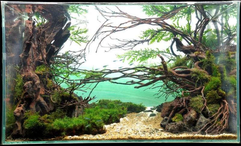 аквариум фотографии