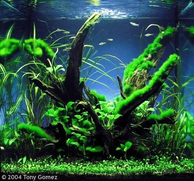 фотографии аквариумов