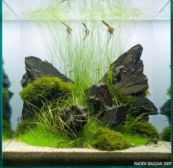фото травников аквариум
