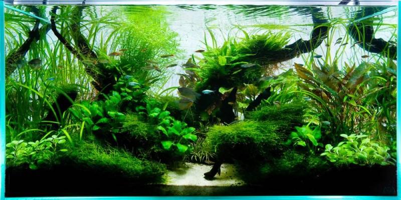 травник аквариум фото