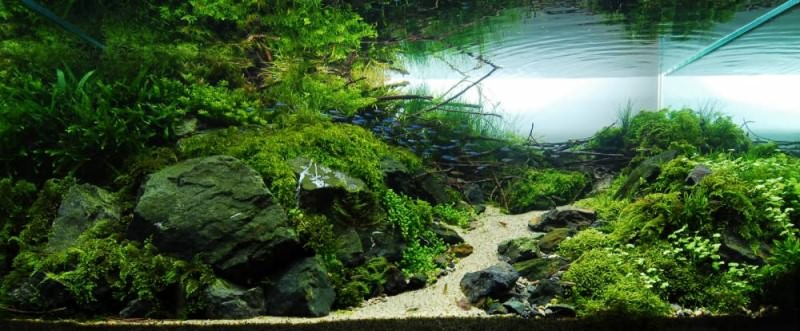 фото аквариумов травник