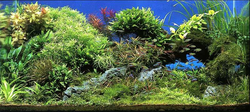 фото красивых аквариумов