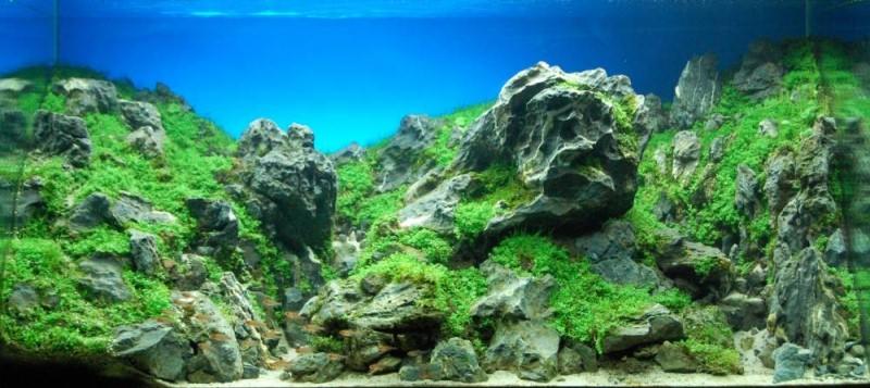 красивыей аквариум