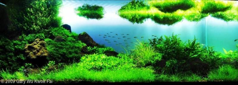 акваруимы