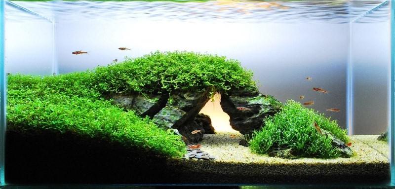 аквариум красивый