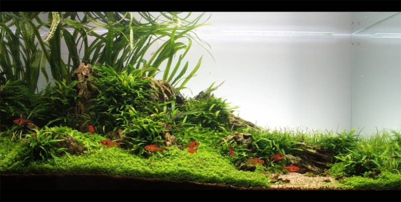 аквариум супер фото