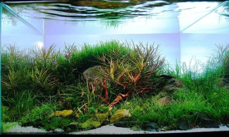 классные аквариумы фото