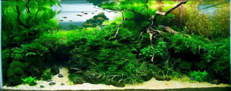 мега аквариум фото