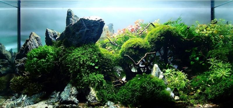 аквариум фото
