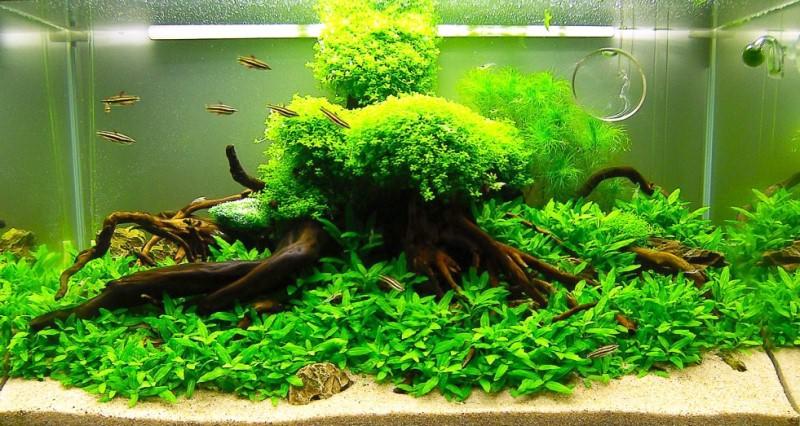 фото аквариумов