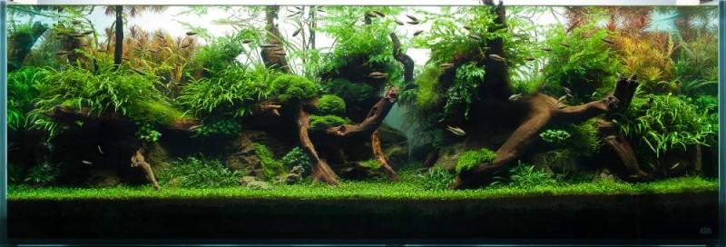 краисый аквариум