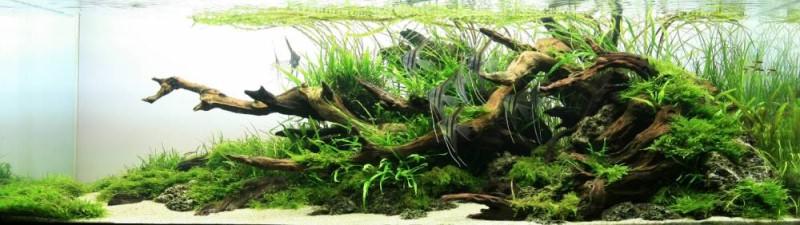 акваруимы фото