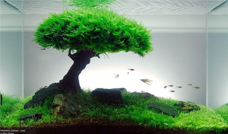 аквариумы фото травник