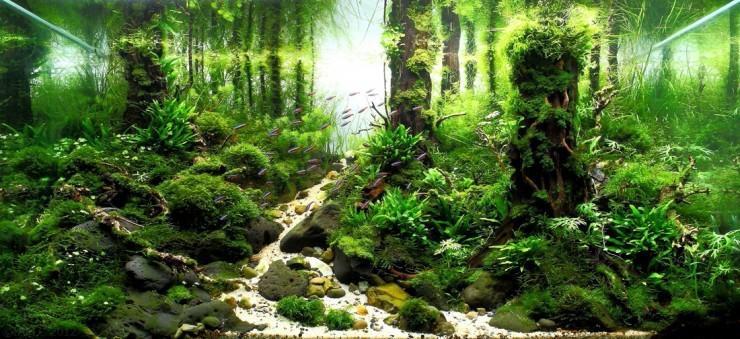 травник фото аквариума