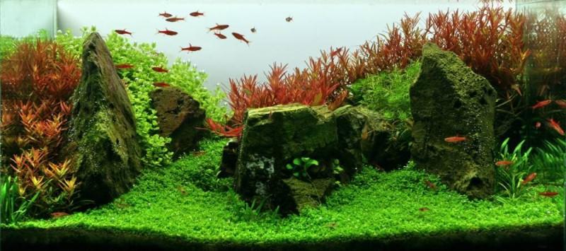 фото голландского аквариума