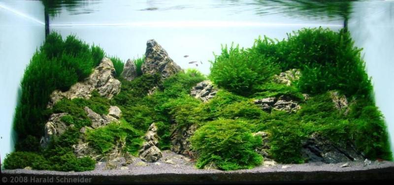 фото амановского аквариума