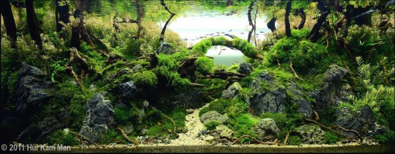 аквариум тарвник