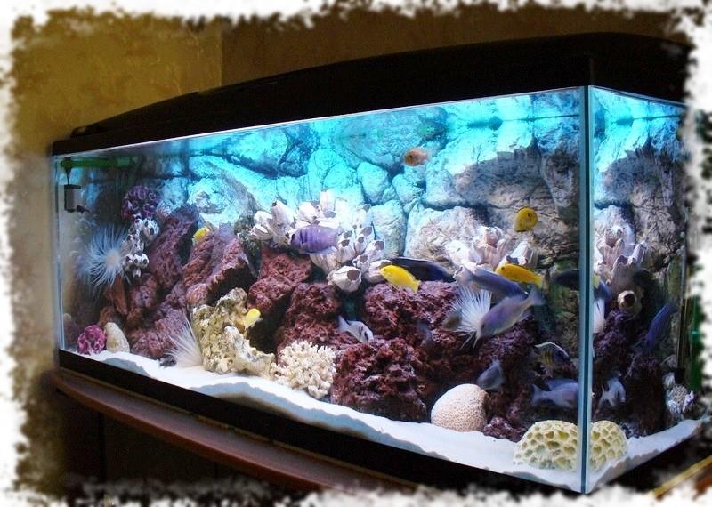 аквариум псевдоморье