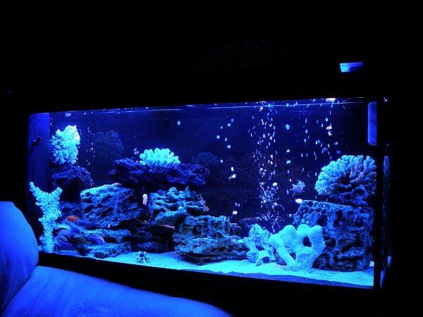 аквариумы фото псевдоморье