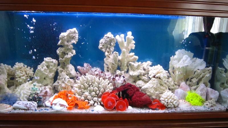 псевдоморье аквариум фото