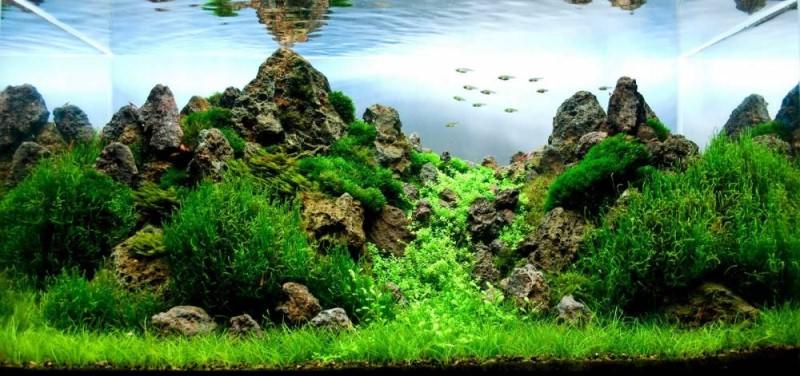 аквариум фото амано