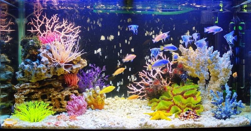 красивое фото аквариума псевдоморье