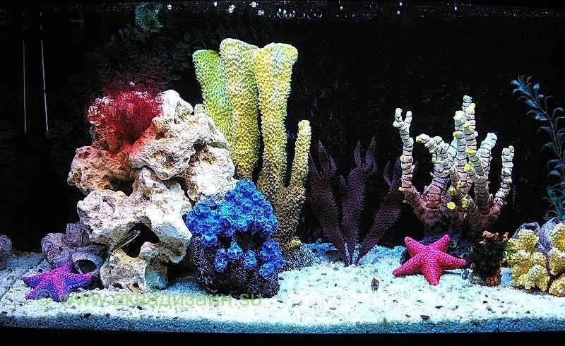 аквариумы фото псевдо море