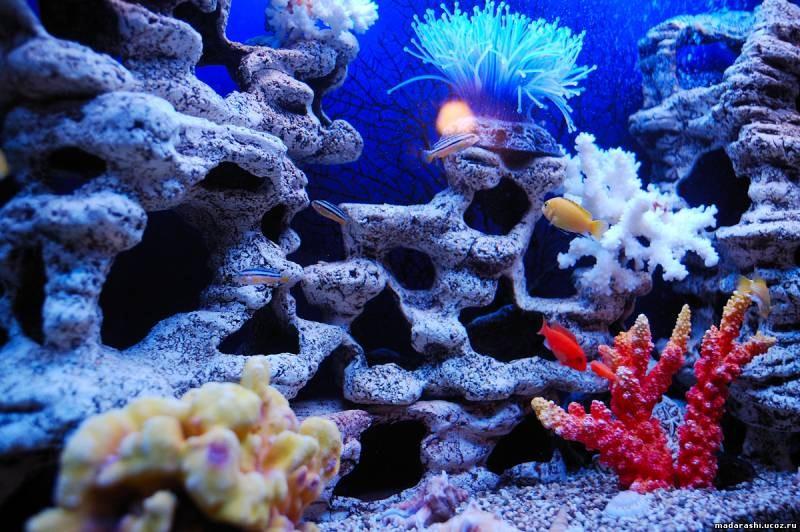 иминатция моря в аквариуме фото