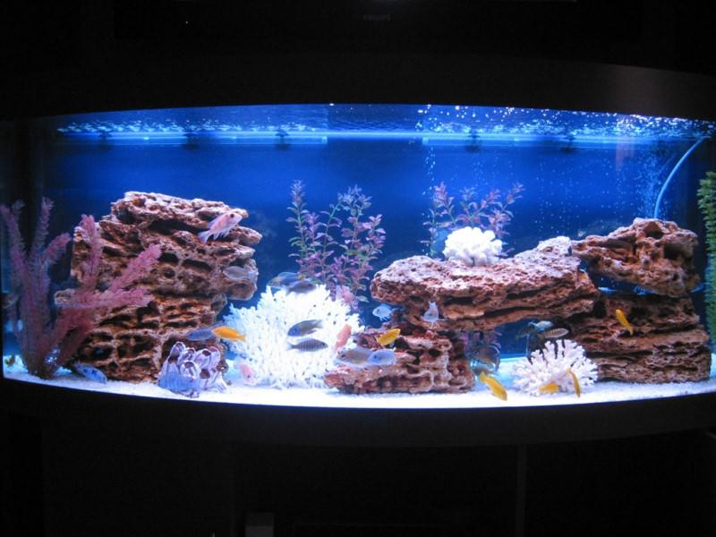 аквариумы фото имитация моря