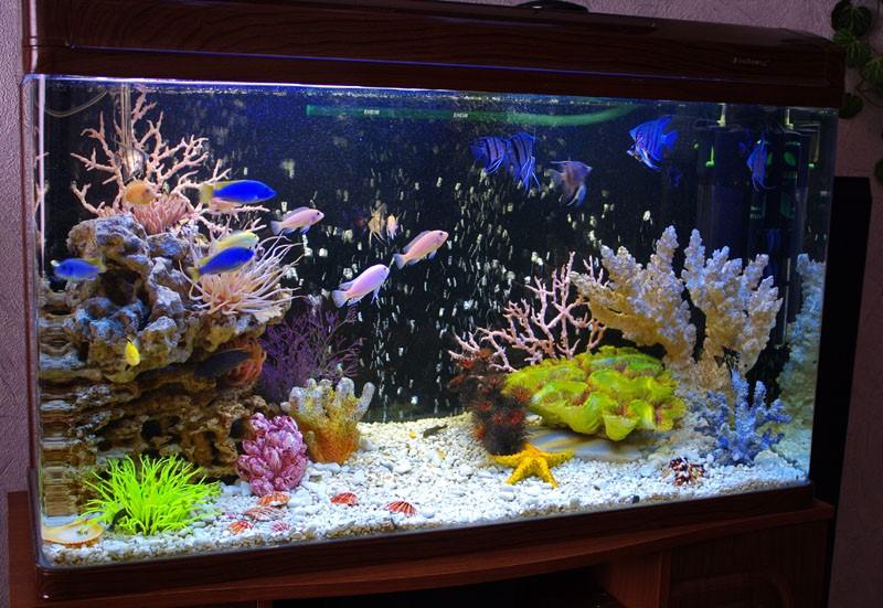 аквариум фотография моря
